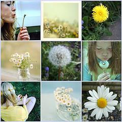 Mosaic danedlions and daisies