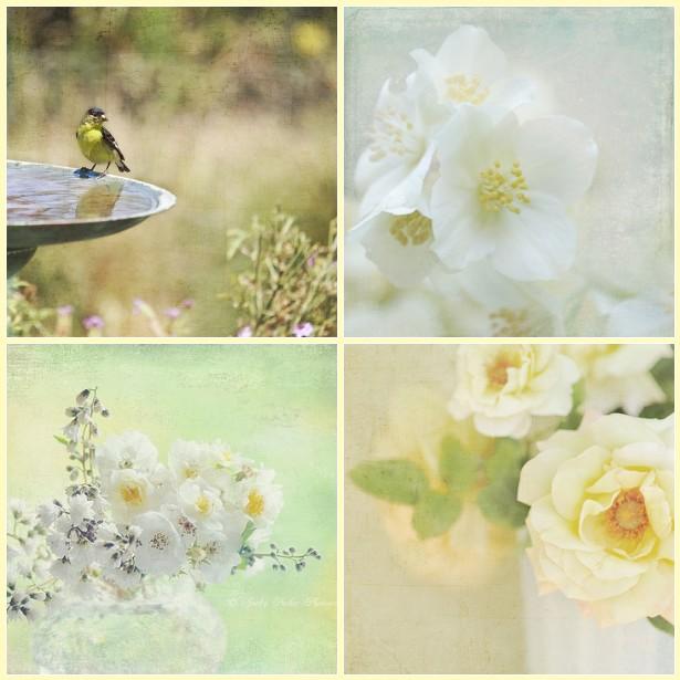 Flora bella lemons