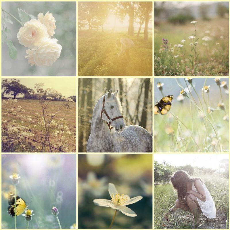 Fairy fields
