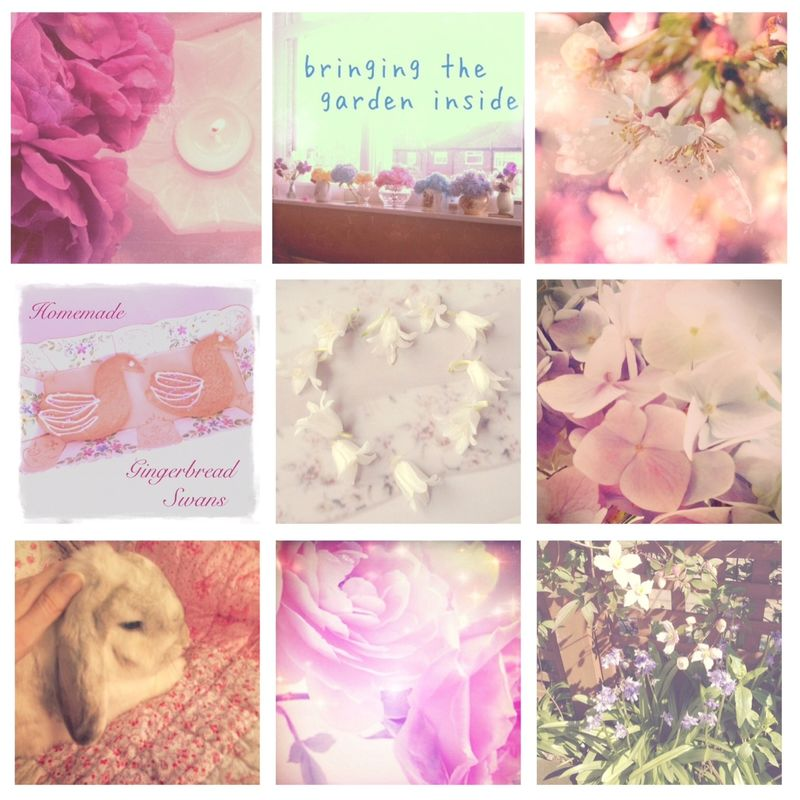 Secretsofabutterfly on instagram