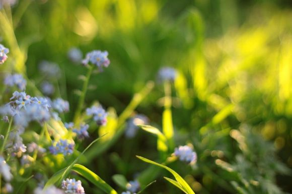 Tiny blooms in soft light